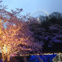 夜桜イルミリオン