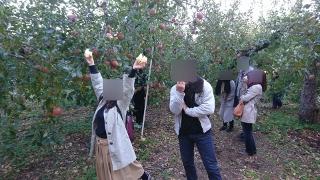 婚活ツアーりんご狩り