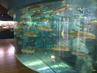森の中水族館