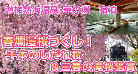 春爛漫桜づくし!1,000本のしだれ桜&三春の滝桜鑑賞・磐梯熱海温泉