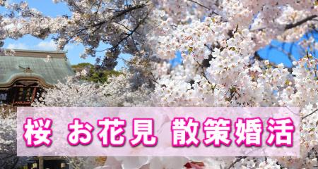 桜お花見散策婚活