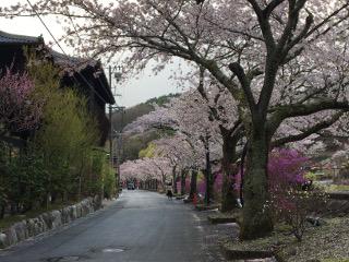桜並木・昼神温泉