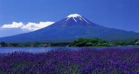 ラベンダーと富士山