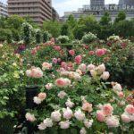 横浜ガーデン