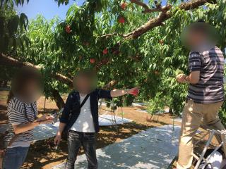 桃狩り あずま果樹園