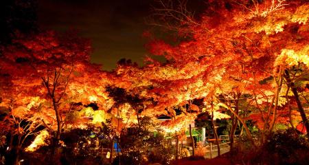 筑波山ライトアップ