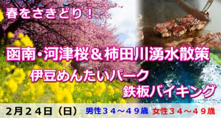 春さきどり!函南・河津桜&柿田川湧水散策と伊豆めんたいパーク・鉄板バイキング