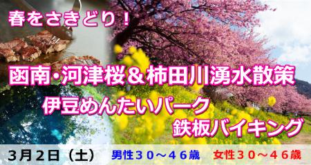 190302 春さきどり!函南・河津桜&柿田川湧水散策と伊豆めんたいパーク・鉄板バイキング