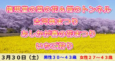 190330 幸手権現堂の菜の花&桜のトンネル・古河桃まつり・あしかが春の花まつりといちご狩り