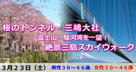 190323 桜のトンネル・三嶋大社&絶景三島スカイウォーク