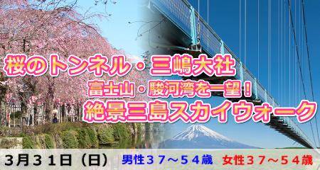 190331 桜のトンネル・三嶋大社&絶景三島スカイウォーク