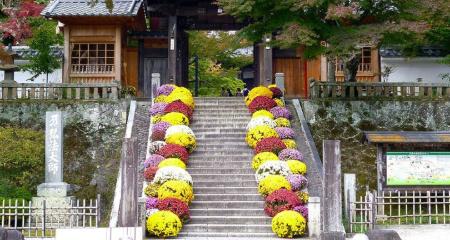 修善寺菊飾り