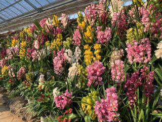 ハーブ庭園の花