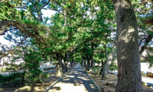 三保の松原神の道